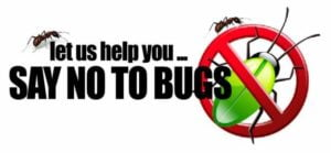 Bed bug removal Toronto