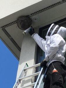 Pest control services Toronto