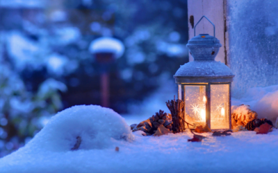 Where do pest go during winter time?
