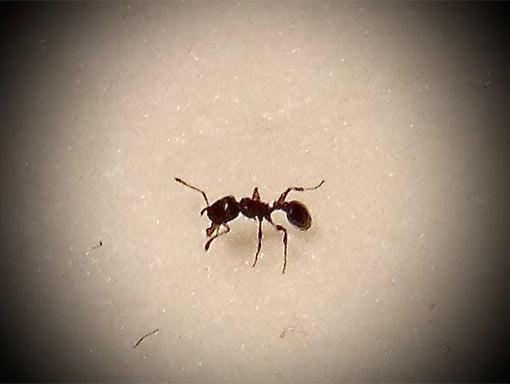 Pest control Toronto