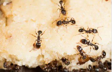 FAQ – Pest control