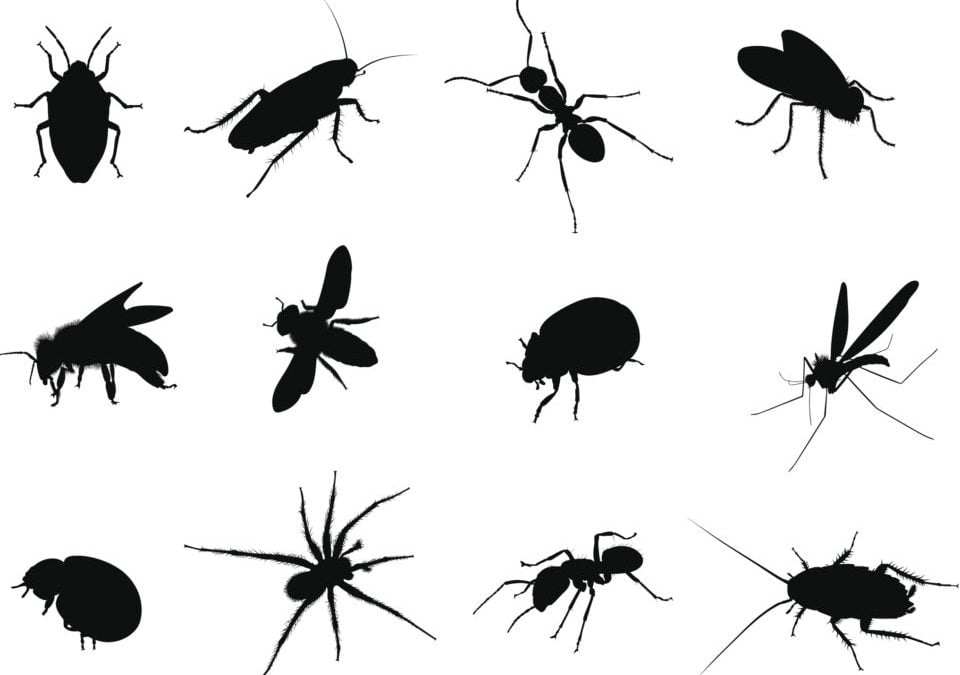 Easy Ways to Get Rid of Bugs Organically