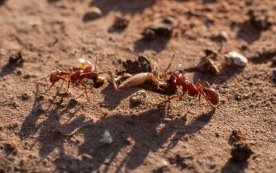 How to Eliminate Winter Ant Problems?