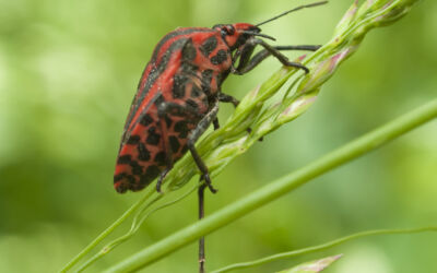 How To Prevent Pests From Taking Over Your Garden